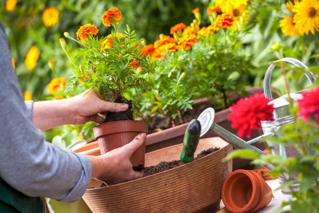 sadzenie-w-doniachach Rośliny w donicach