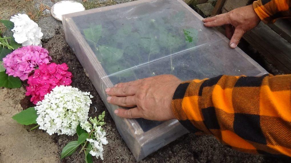 dsc02057 Przygotowanie podłoża podukorzenianie roślin