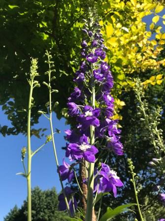 img_1485 Jak pozyskać nasiona kwiatów?