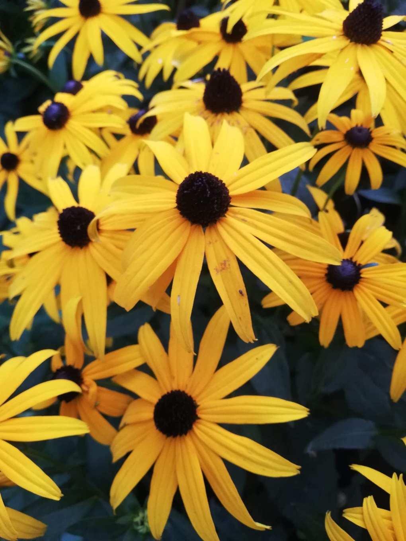 img_2458 Jak pozyskać nasiona kwiatów?