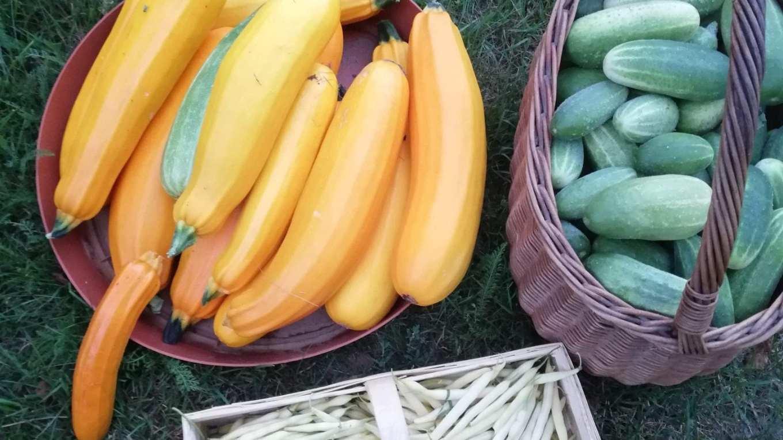 Cukinie, ogórki, fasolka szparagowa