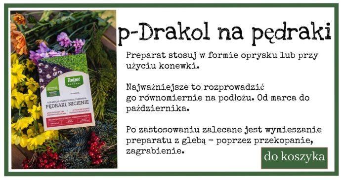 p-Drakol-1-1024x538 Pędraki w trawniku. Jak się ich pozbyć?