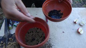 DSC02955-300x169 Żeby pestka zaczęła kiełkować...