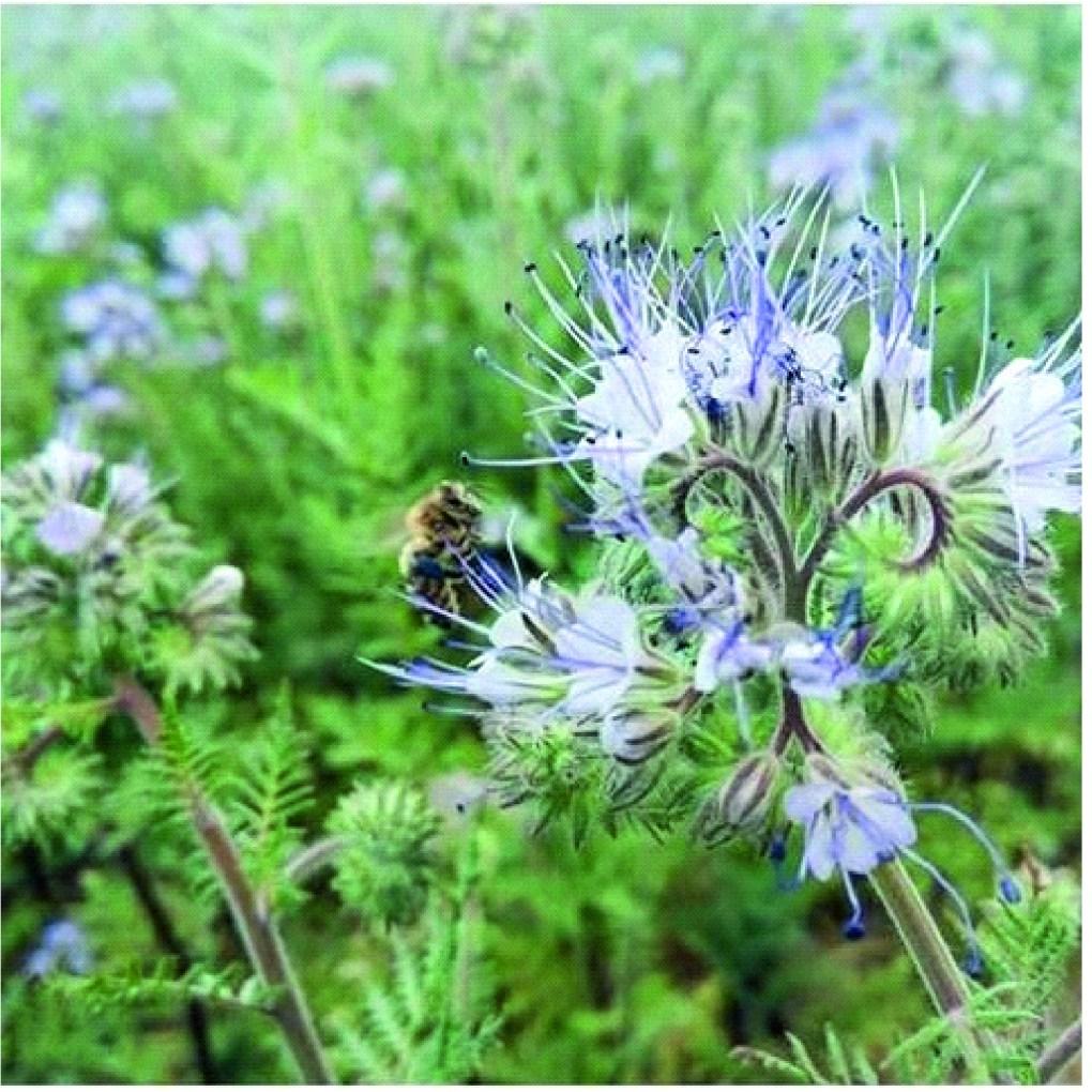 pszczola-1024x1024 Miód z ekologicznej pasieki