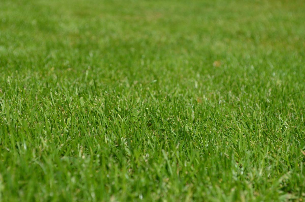 Jak stworzyć gęsty trawnik?