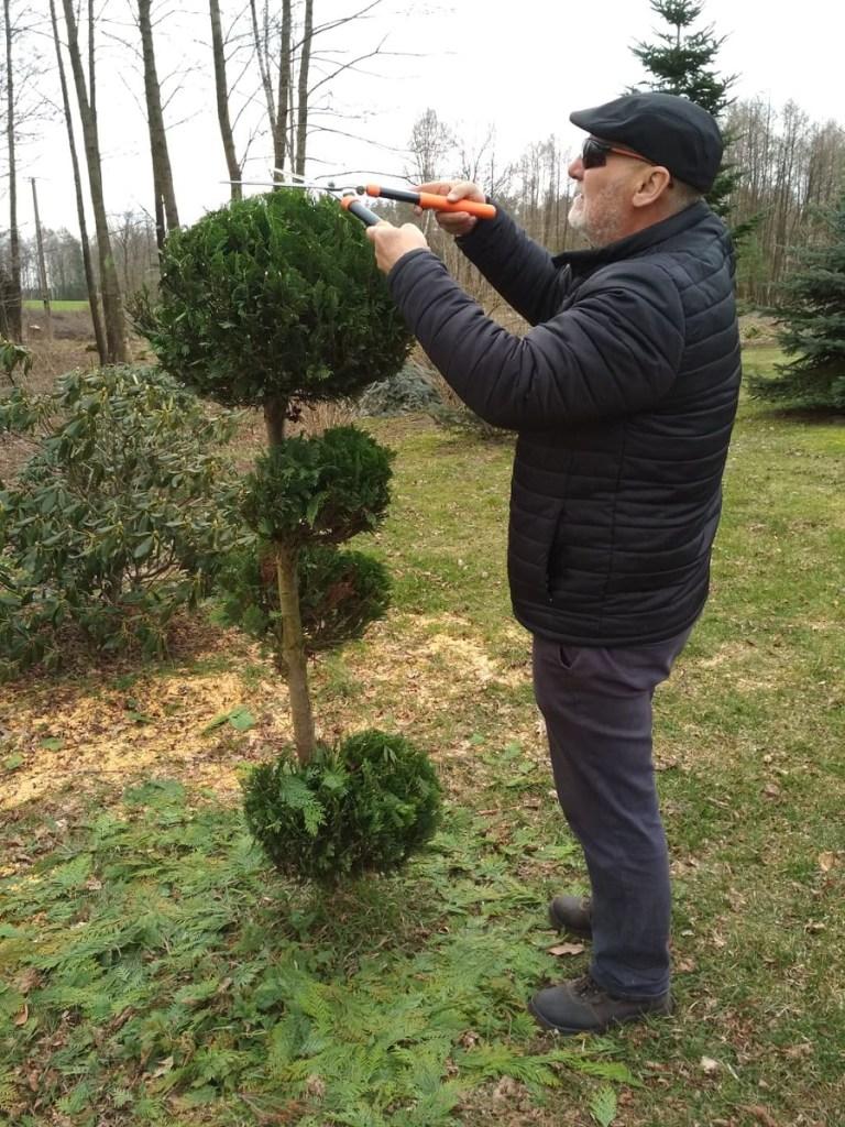 przycinanie-podcast-768x1024 Kalendarz cięć drzew i krzewów