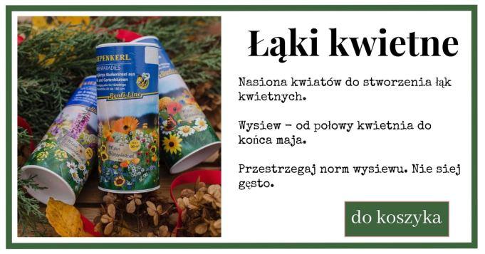 ki-kwietne-1024x538 Łąki kwietne - piękna alternatywa dla trawników