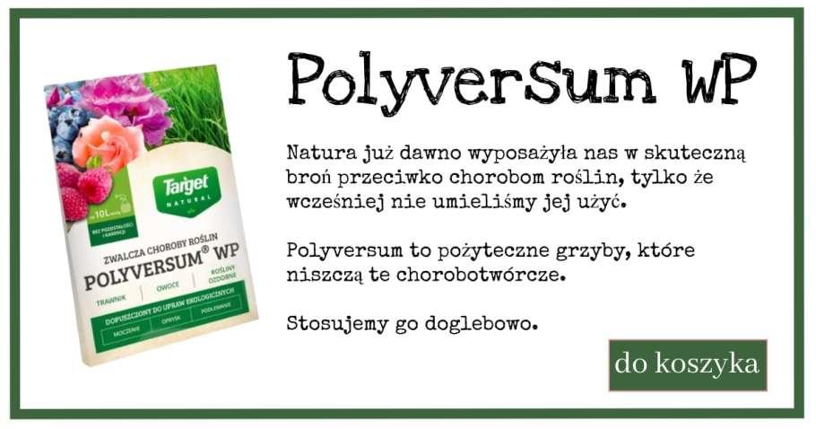 Polyversum-3-1024x538 Co to jest Polyversum WP i czy pomoże w naturalnej ochronie ogrodu? Zielone Porady 24
