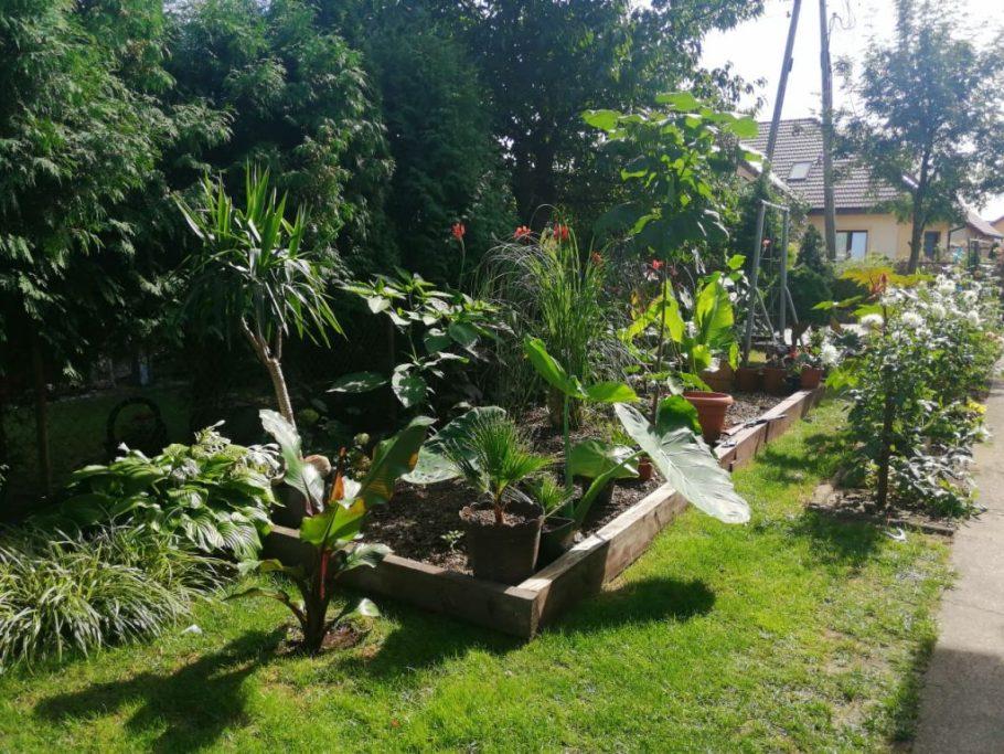 rabata-egzotyczna-1024x768 Czy w Polsce da się uprawiać rośliny egzotyczne?