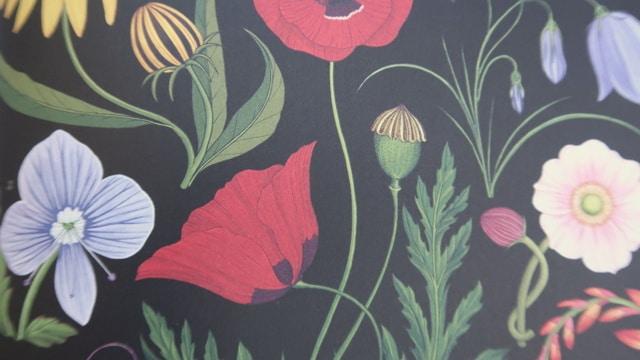 botanicum-ksiazka-2 Książki o ogrodzie dla dzieci - część 1