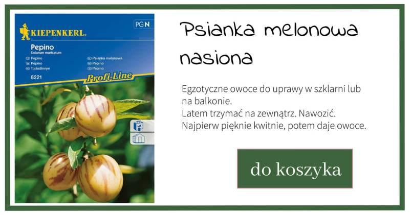 psianka-melonowa-1024x538 Psianka melonowa - co to jest?