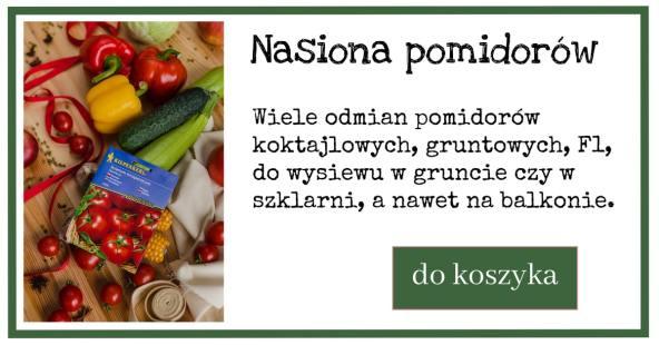 pomidory-reklama-nasiona-1024x538 Uprawa pomidorów krok po kroku