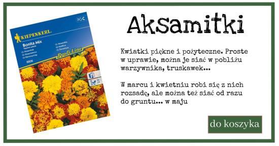 aksamitka-1-1024x538 Sposoby na nicienie i szkodniki glebowe