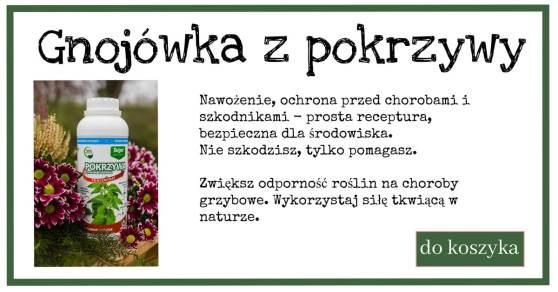 pokrzywa-2-1024x538 Nawozy naturalne (Natural fertilizer recipes)