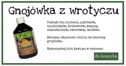 wrotycz-1-1024x538 Nawozy naturalne (Natural fertilizer recipes)