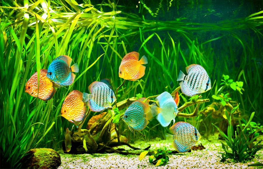 Außenfilter für Aquarien