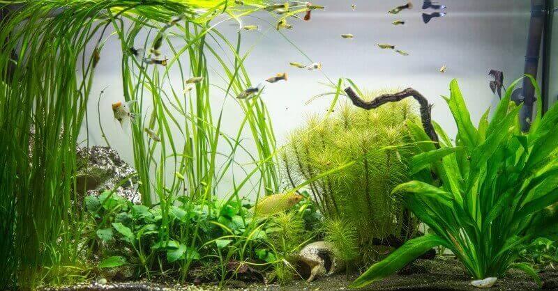 Wasserpflanzen im aquarium for Miniteich fische
