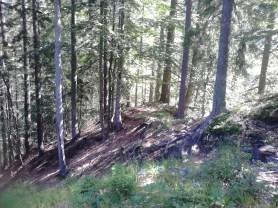 na zemljevidu je ta pot vrisana čisto narobe, jo je pa zelo enostavno najti, na koncu gozdne ceste jo poiščemo