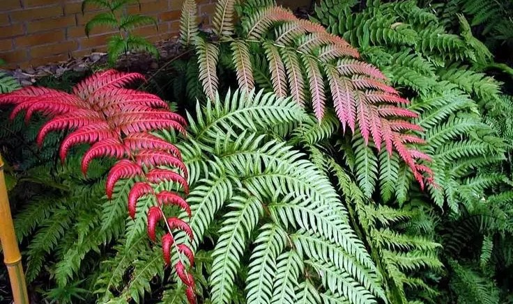 Growing Beautiful Ferns 1