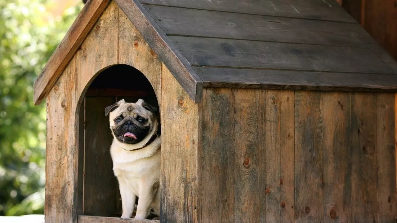 What's Kennel Cough And How One Can Remedy The Symptoms