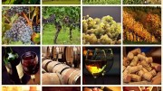 Red Wine: Everything you need to know 2
