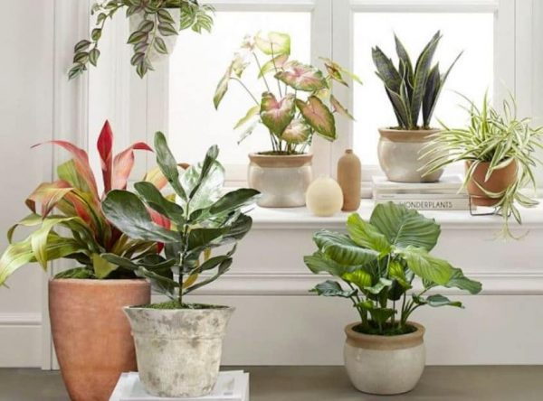 Are Fake Plants Better Than Real?