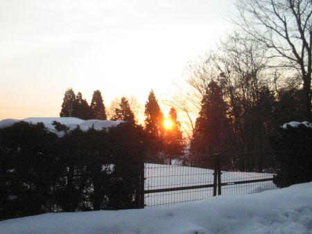 木々からあふれる朝日