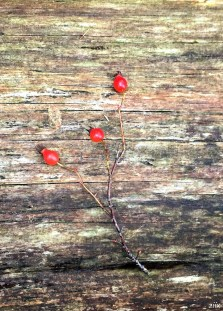 16-12-25-lake-berries-z