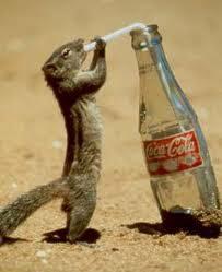 tupai minum coca-cola,