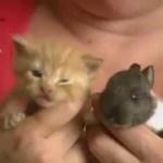 Ibu kucing prihatin yang menjaga dan menyusukan anak arnab