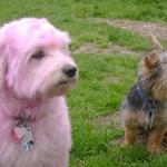 Kisah dua ekor anjing yang cute
