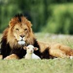 Wordless wednesday 14# (Lion and the Lamb)