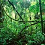 Karangan- sesat di hutan darjah 2.