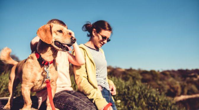 צימרים יוקרתיים עם כלבים ופינוקים ב-2021