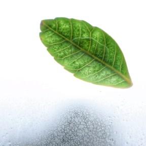 FullSizeRender leaf