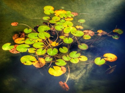 Pond, English Cottage Garden, Hamilton Gardens, Waikato, NZ. Image: Su Leslie, 2017