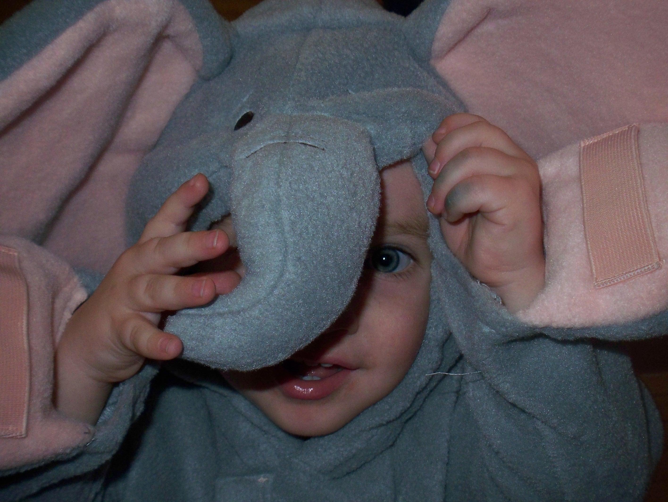 """""""I'm an Elephant!"""""""
