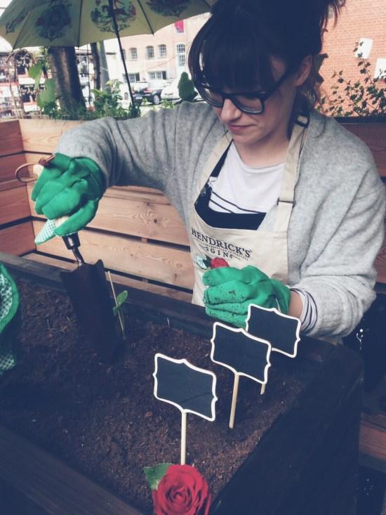 Gurke einpflanzen mit Hendrick's Gin