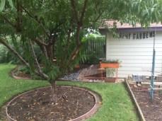 Happy Gardening in Austin