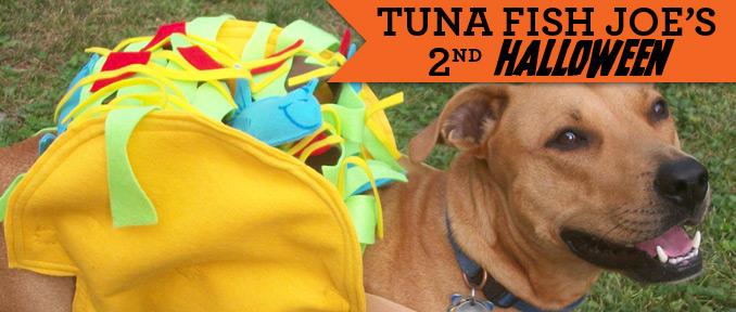 Tuna's Taco Delight | Halloween Dog Costume