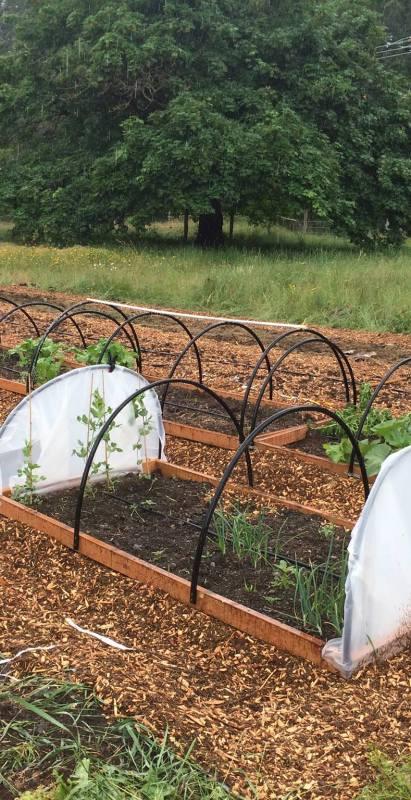 My Second Year Garden Stories