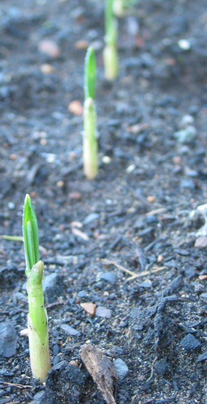 Late Getting Your Garden Started? Why You're Actually NOT.