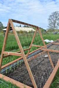 A-Frame Trellis Improve your garden yield