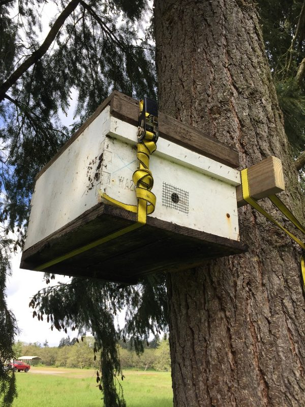 Put your Swarm Trap Up a Tree