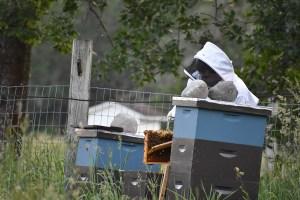 Bee Brushing