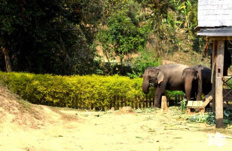 A mahout is an elephant's keeper and trainer and was once a highly-respected position in Lao society.