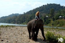Elephant Village is an elephant sanctuary from 2001 in Luang Prabang.