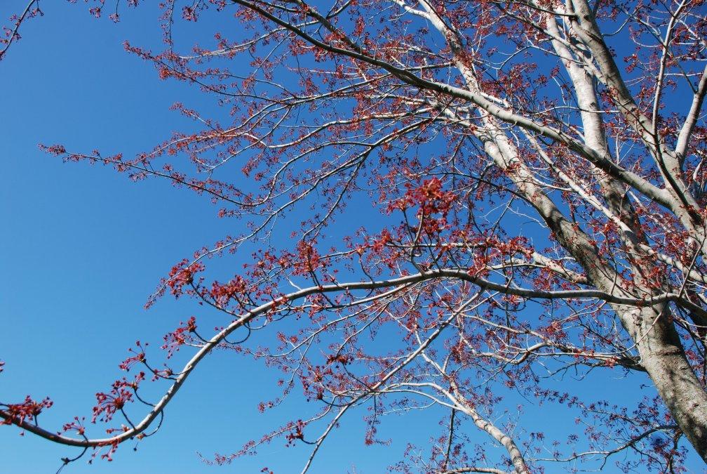 Spring-03-DSC_2262