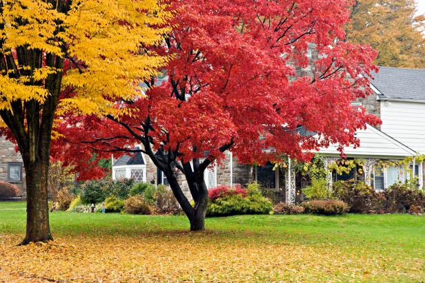 tips for selling your home in the fall and winter - Fall Trees