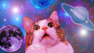 Photo of Felines: The Internet's Obsession With Cat Videos